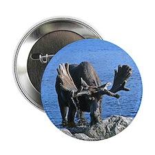 """Bull in velvet 2.25"""" Button"""