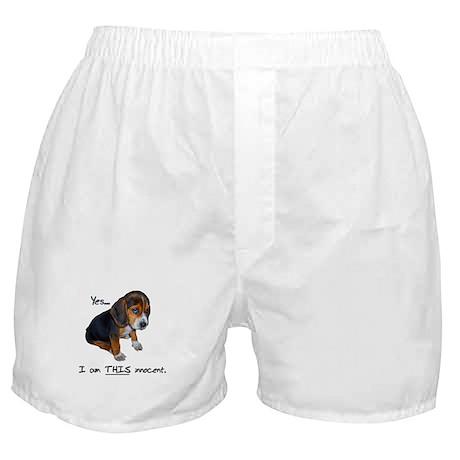 Innocent Puppy Boxer Shorts
