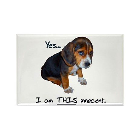 Innocent Puppy Rectangle Magnet