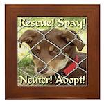 Adopt A Dog! Framed Tile
