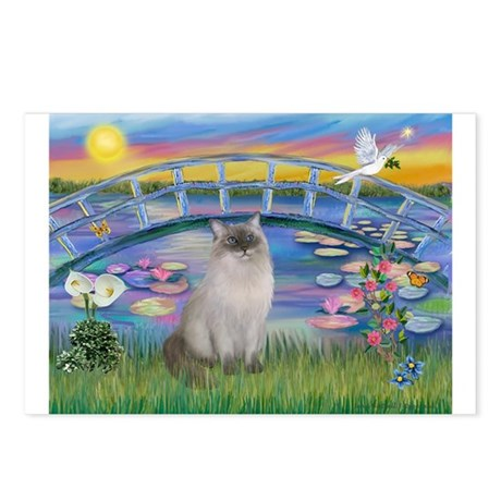 Lilies / Ragdoll Postcards (Package of 8)