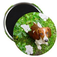 Doxie Flowers Magnet