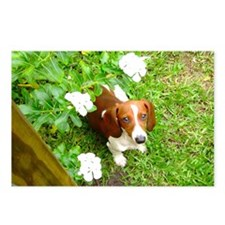 Doxie Flowers Postcards (Package of 8)