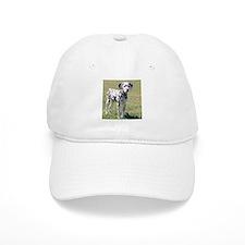 Dalmatian Puppy Baseball Cap