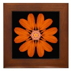 Orange Zinnia I Framed Tile