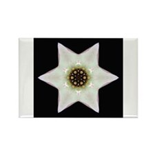 Dogwood Blossom I Rectangle Magnet