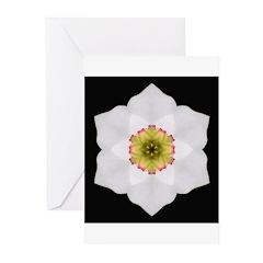 Daffodil I Greeting Cards (Pk of 10)