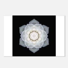 White Rose I Postcards (Package of 8)