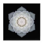 White Rose I Tile Coaster