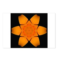 Orange Daylily I Postcards (Package of 8)