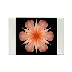 Salmon Daylily Rectangle Magnet