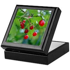 Red Berries Keepsake Box