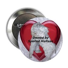 Owned by spoiled Maltese Button