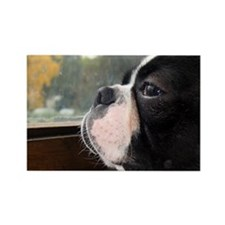 Cute French bulldog Rectangle Magnet (10 pack)