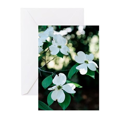Dogwood Blossoms - Greeting Cards (Pk of 10)