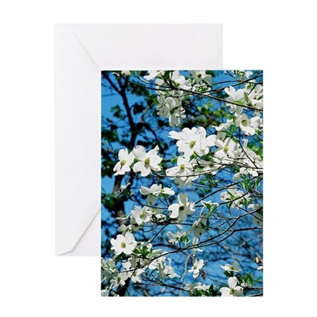 Dogwood Blossoms - Greeting Card