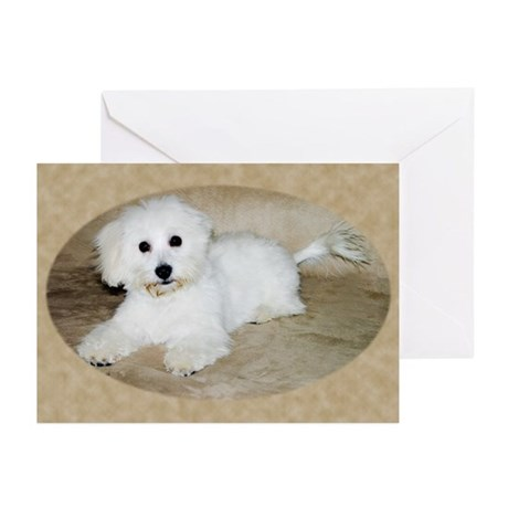 Coton De Tulear Greeting Cards (Pk of 20)