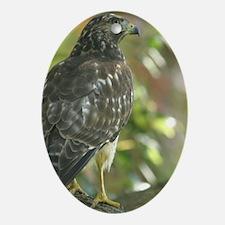 Sharp Shinned Hawk Oval Ornament