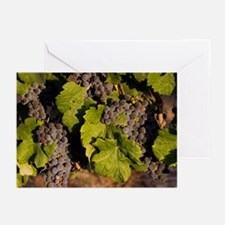 Grapes 3 Greeting Cards (Pk of 10)