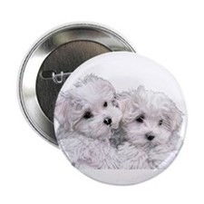 "Bichon Frise 2.25"" Button"