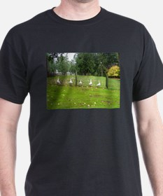 All my ducks in a row T-Shirt