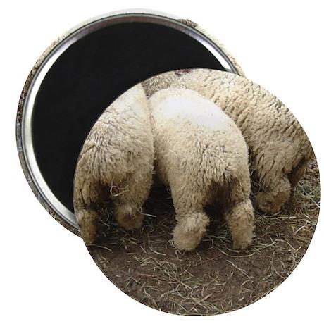 SHEEP Magnet
