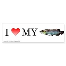I Love My Black Arowana Bumper Bumper Sticker
