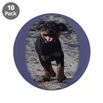 Romping Rottweiler Puppy 3.5