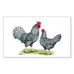 Dominique Chickens Rectangle Sticker 50 pk)