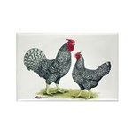 Dominique Chickens Rectangle Magnet (10 pack)