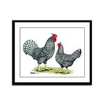 Dominique Chickens Framed Panel Print