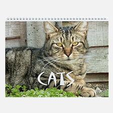 Cats 2013 Wall Calendar