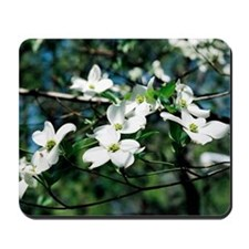 Dogwood Blossoms - Mousepad