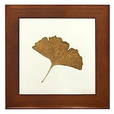 Ginkgo Leaf Framed Tile