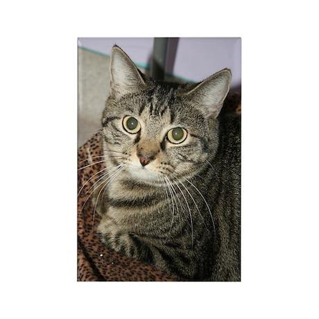 Cat Photo Rectangle Magnet