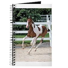 Running Foal - Journal