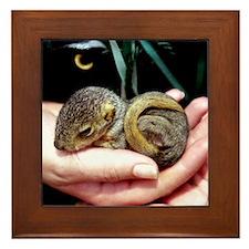 Baby Squirrel - Framed Tile