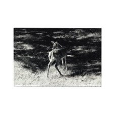 Fawn - Rectangle Magnet