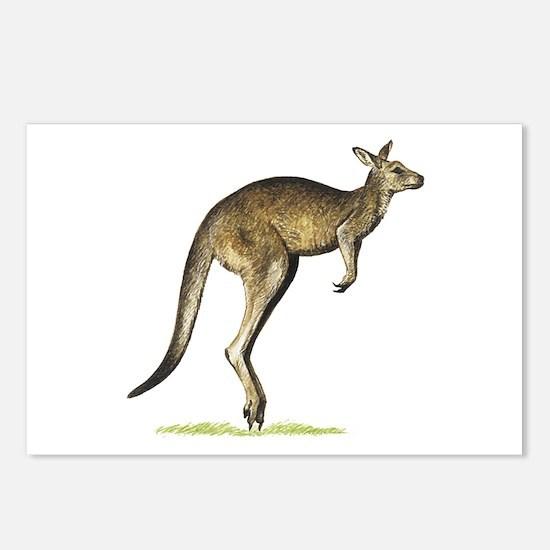 Gray Kangaroo Postcards (Package of 8)
