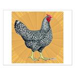Dominique Chicken Hen Small Poster