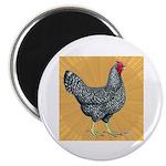 Dominique Chicken Hen Magnet