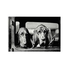 Vintage Bloodhound Rectangle Magnet