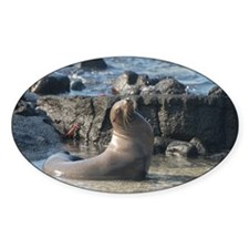 Sea Lion 1 Oval Decal