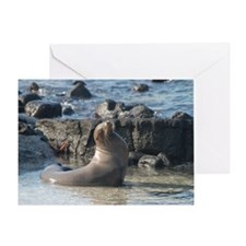 Sea Lion 1 Greeting Card
