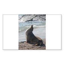 Sea Lion 2 Rectangle Decal
