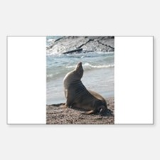 Sea Lion 2 Rectangle Decal