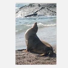 Sea Lion 2 Postcards (Package of 8)