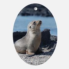 Sea Lion 3 Oval Ornament