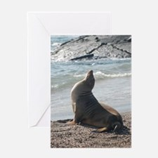 Sea Lion 2 Greeting Card