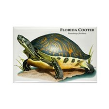 Florida Cooter Rectangle Magnet